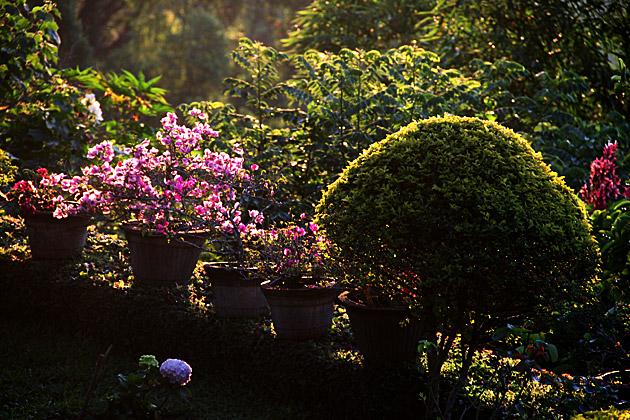Morning Light Sri Lanka