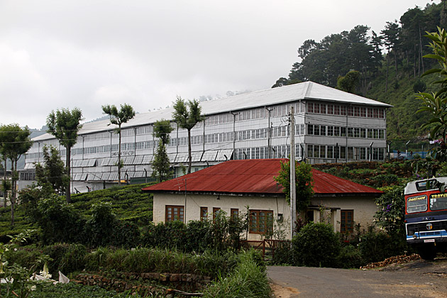 Dambatenne-Tea-Plantation