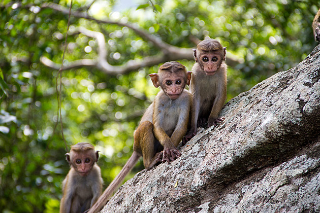 Super Cute Monkeys
