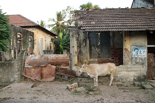 War Cow