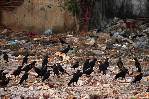 War Ravens