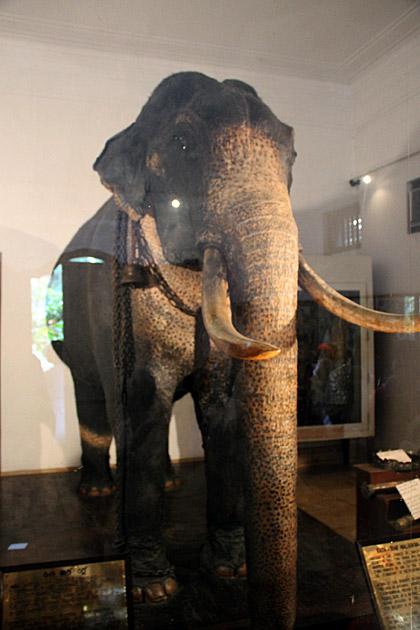 Raja Tusker Museum