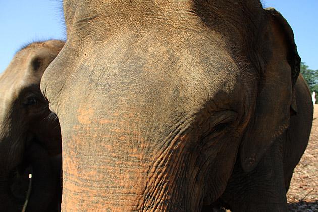 Close Encounter With Elephant