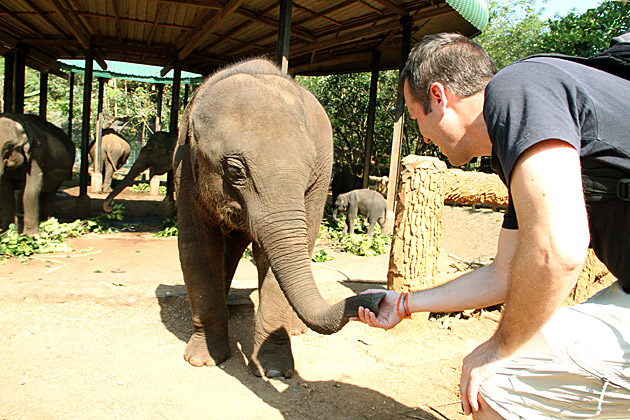 Contact With Baby Elephant
