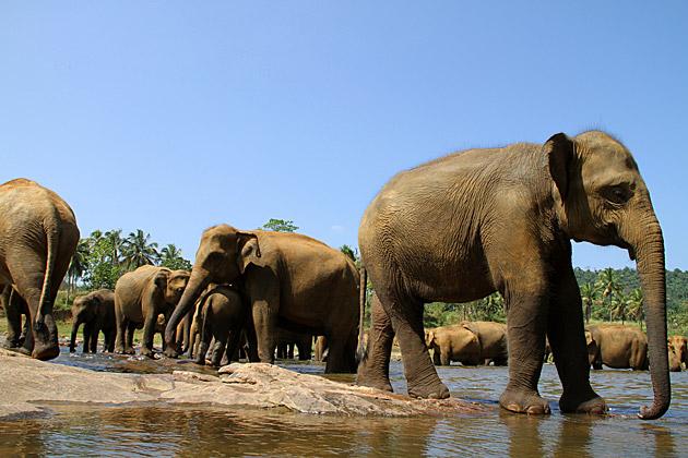 Elephant Blog