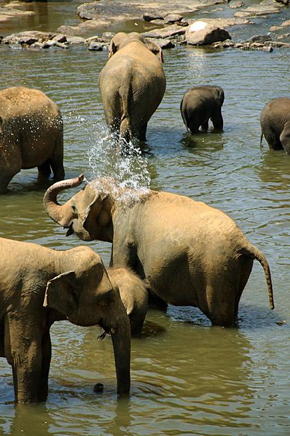 Elephant Splash