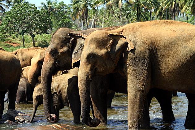 Elephant Treatment