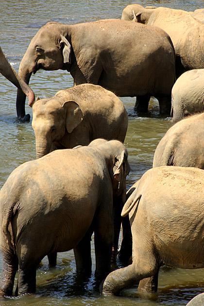 Elephant Mess