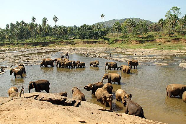 Pinnawela-Elephant-Orphanage Sri Lanka