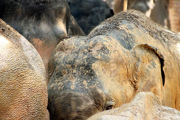 Sneaky Elephant