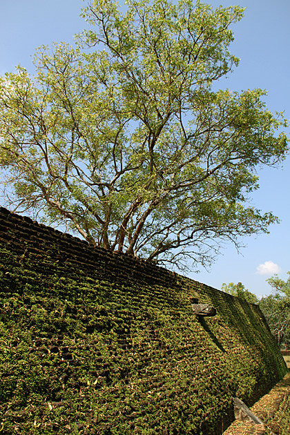 Green Wall Polonnaruwa