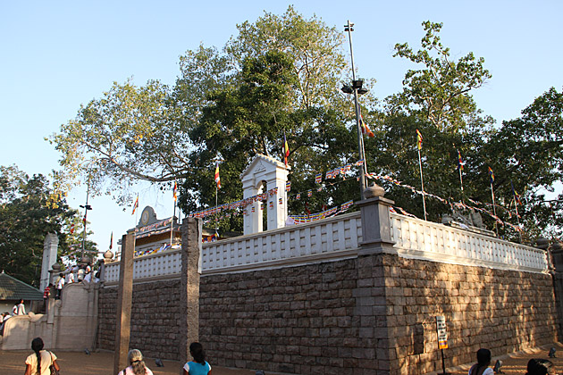 Bodhi-Tree-Anuradhapura
