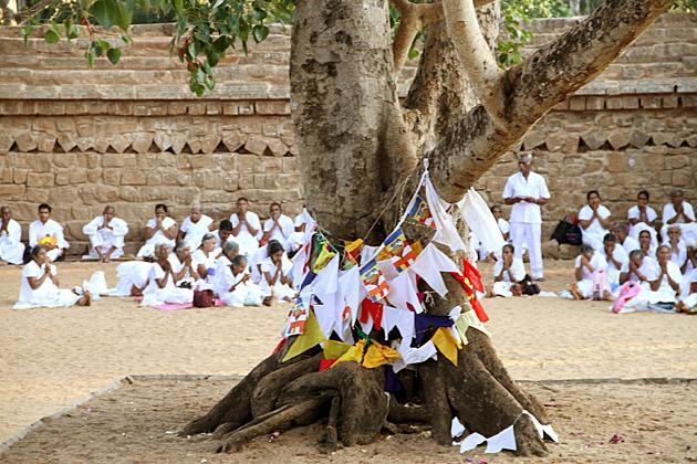 Sri-Maha-Bodhi