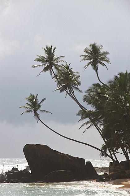 Sri Lanka Luck