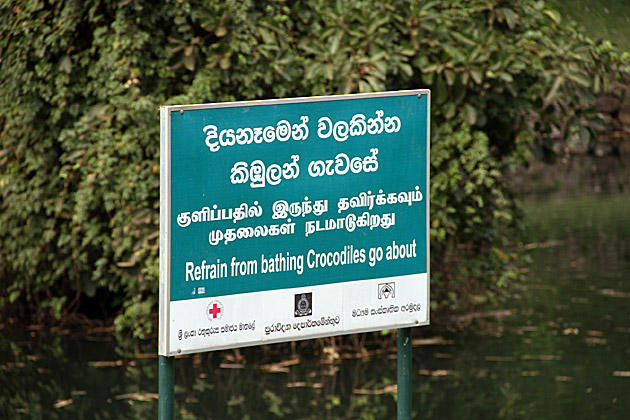 Sri Lanka Crocodiles