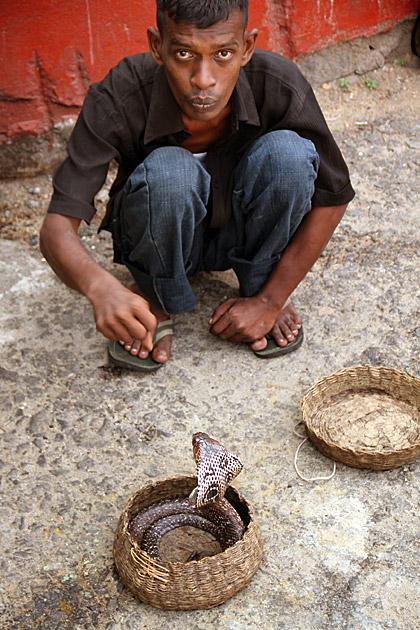 Taiming Snakes