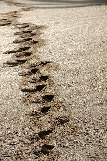 Sand Stepper