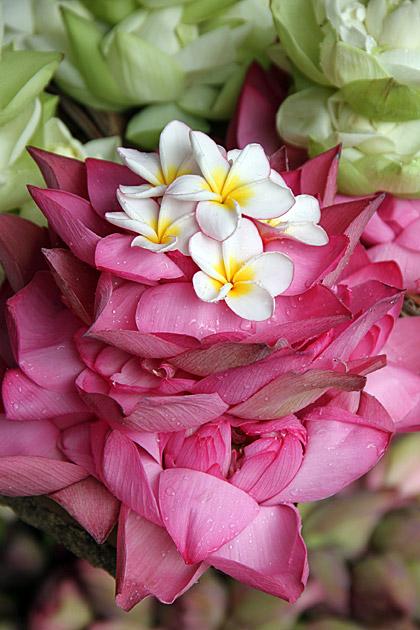 Buddha Flowers