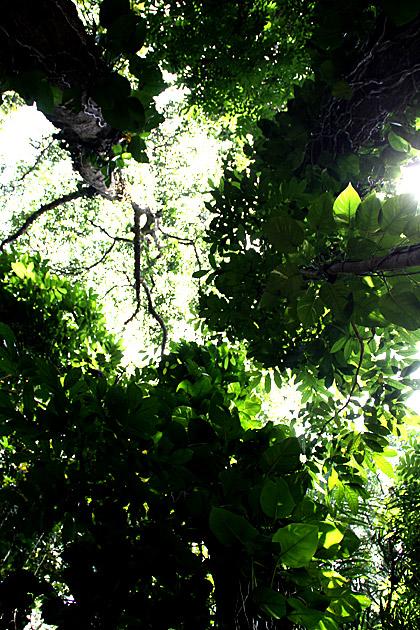 /Udawattakele-Sanctuary