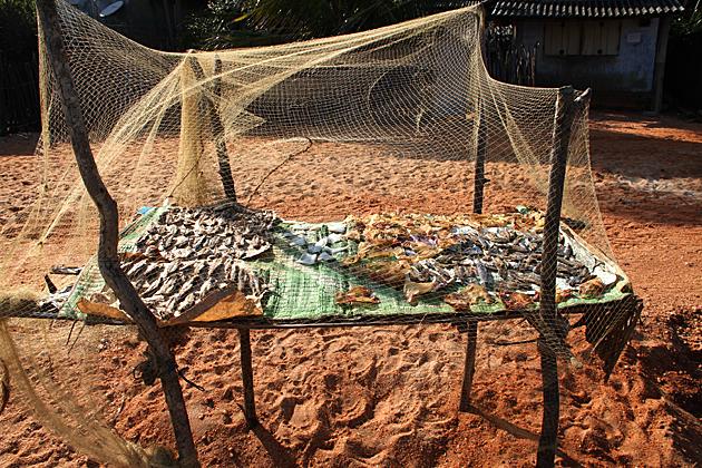 Drying Fish Sri Lanka