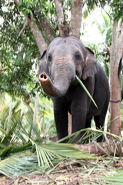 Wewurukannala-Elephant