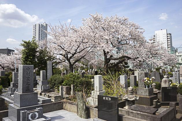 Aoyama Cemetery Sakura Tokyo