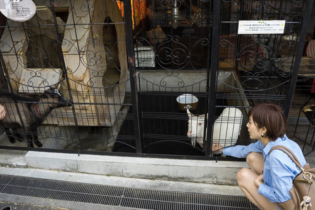 Shibuya Goat Cafe
