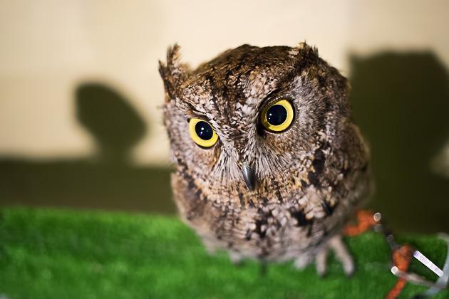 Asakusa's Owl & Parakeet Cafe
