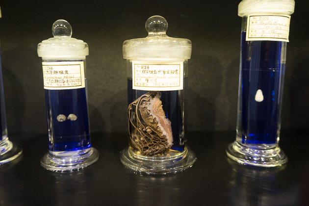 Parasitological Museum of Meguro