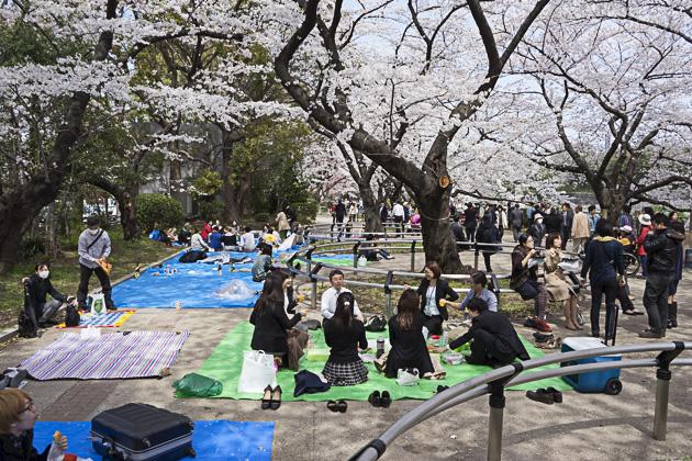Sakura Chidorigafuchi and Kitanomaru Park