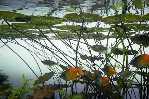 Sumida Aquarium Tokyo