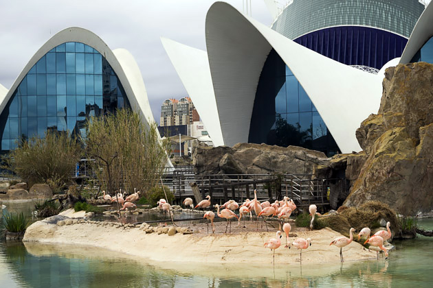 Valencia Aquarium