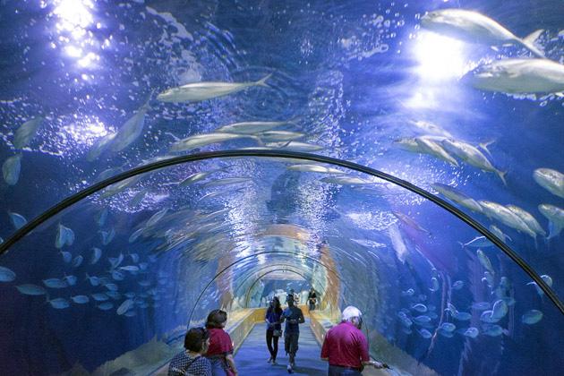 L 39 oceanogr fic europe 39 s biggest aquarium valencia for Entradas aquarium valencia