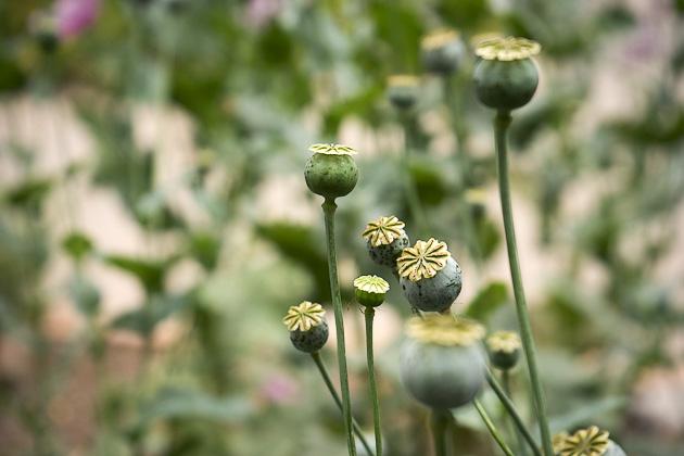Botanic Garden Valencia
