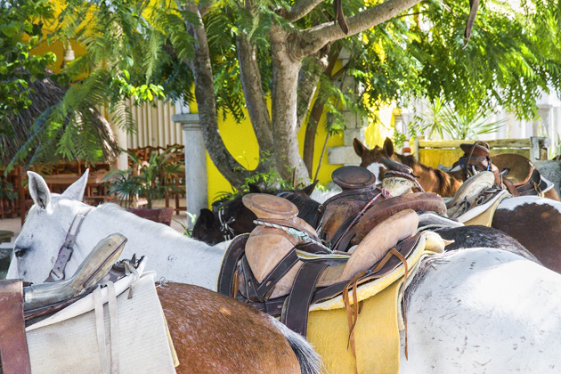 Horse Back Riding Cozumel