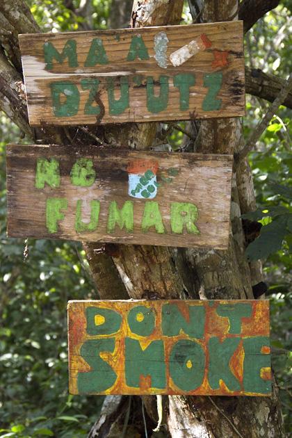 Howler Mokeys Punta Laguna