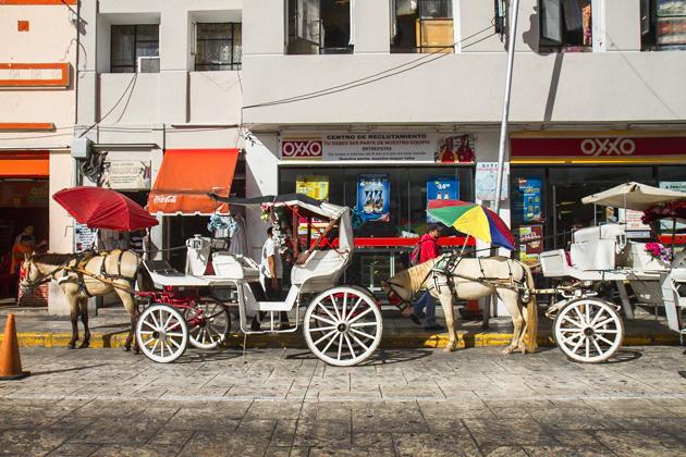 Horse Carriage Merida