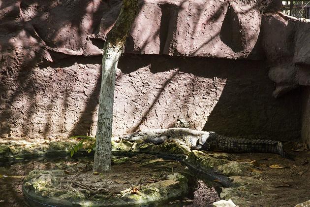 Zoo Merida