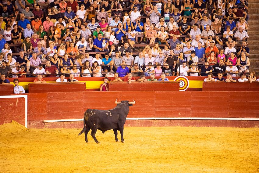 Bull Jumping Valencia