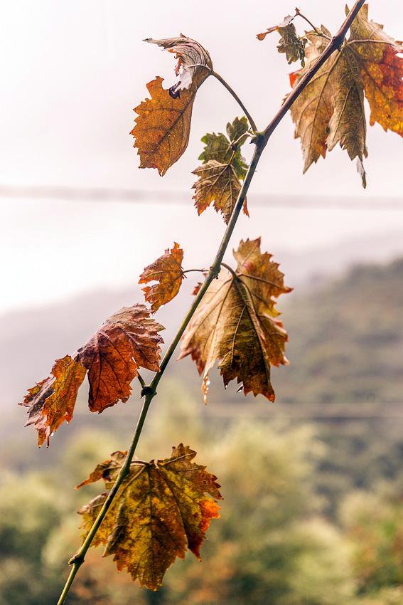 25 Mountain Rain Crete DSC06488