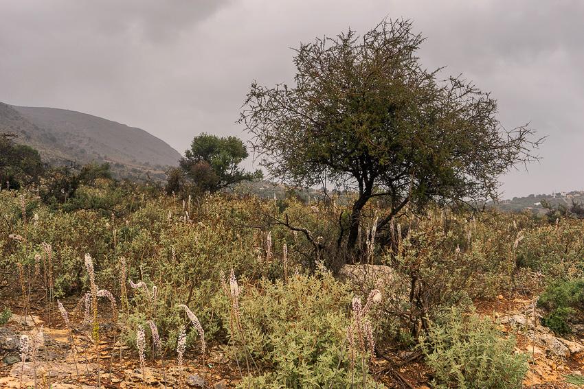 28 Mountain Rain Crete DSC06498