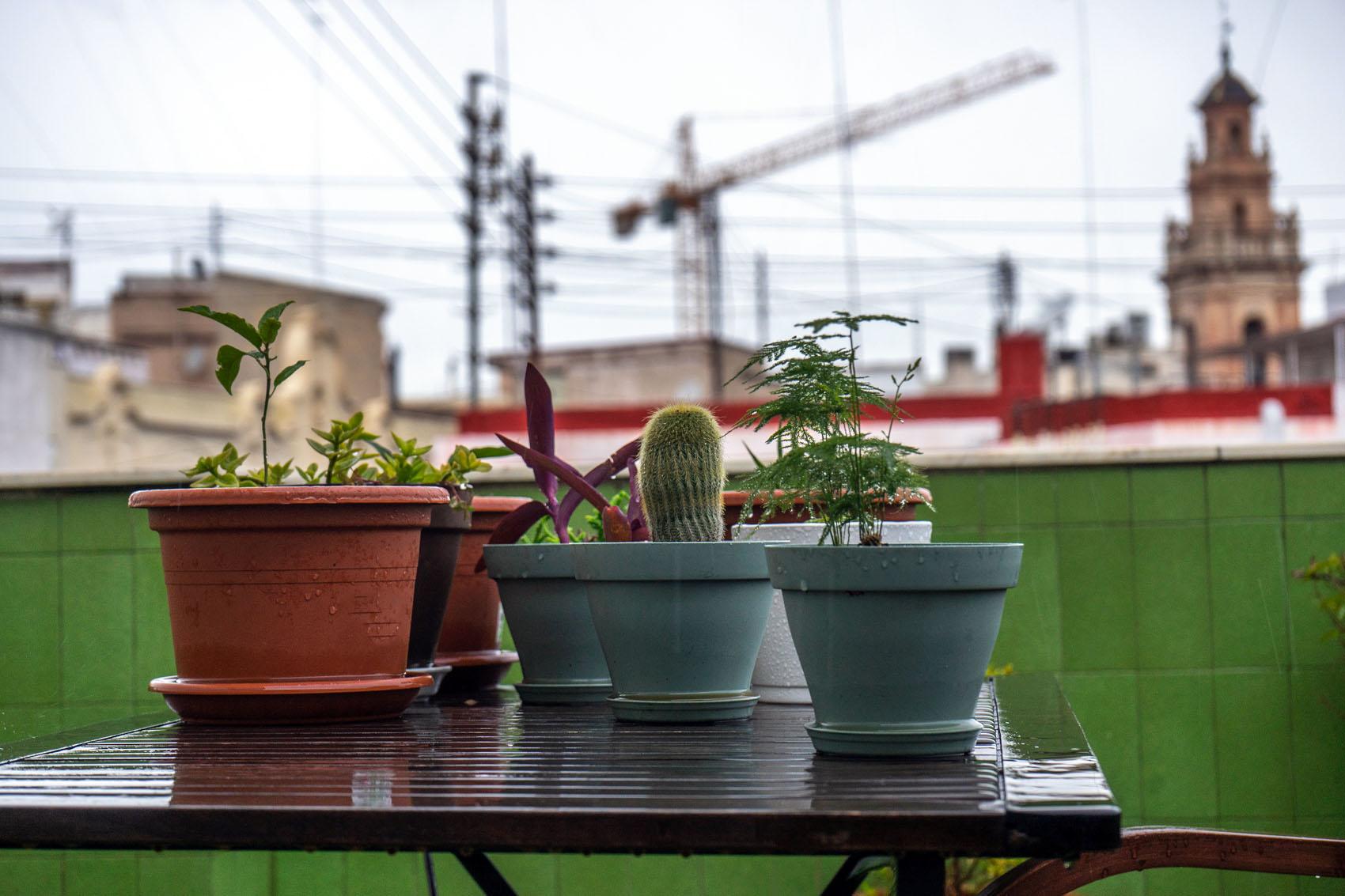 Terrace plants Rain