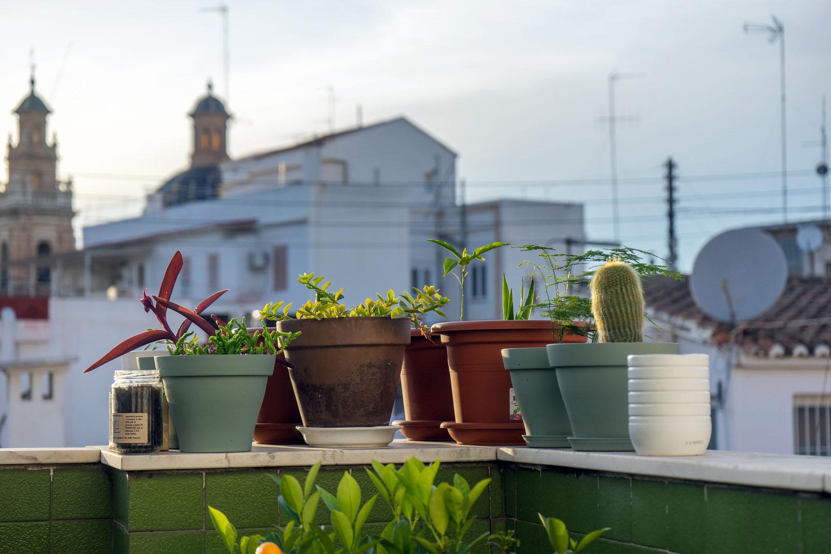 Terrace plants stock photo