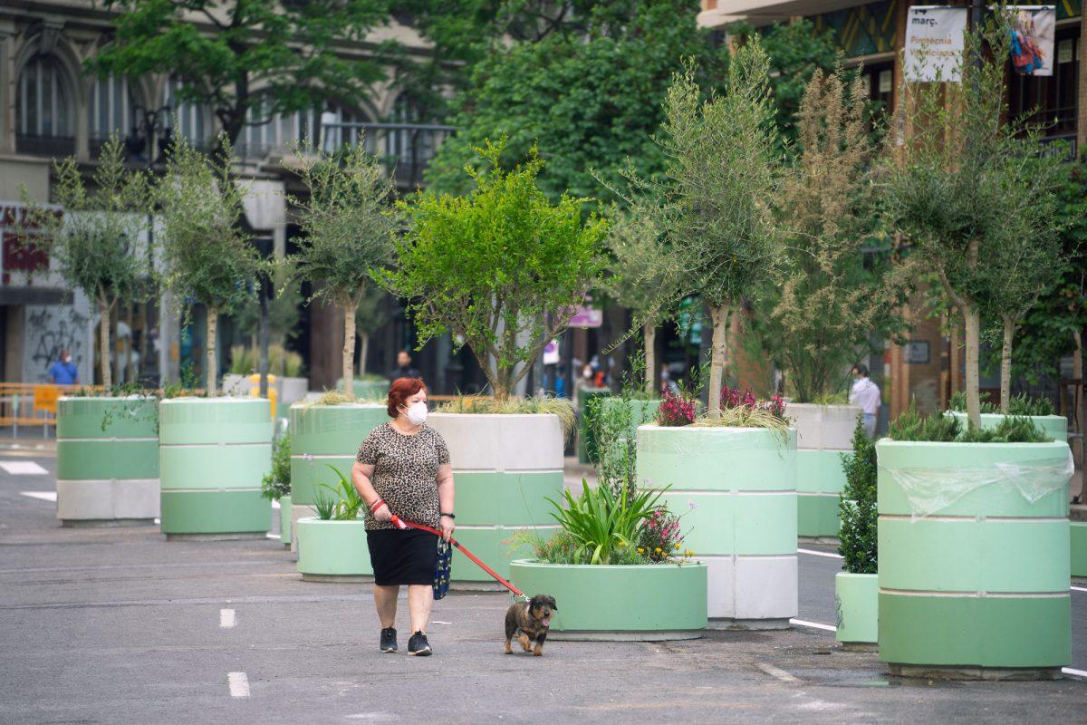 Pandemic Dog Walking