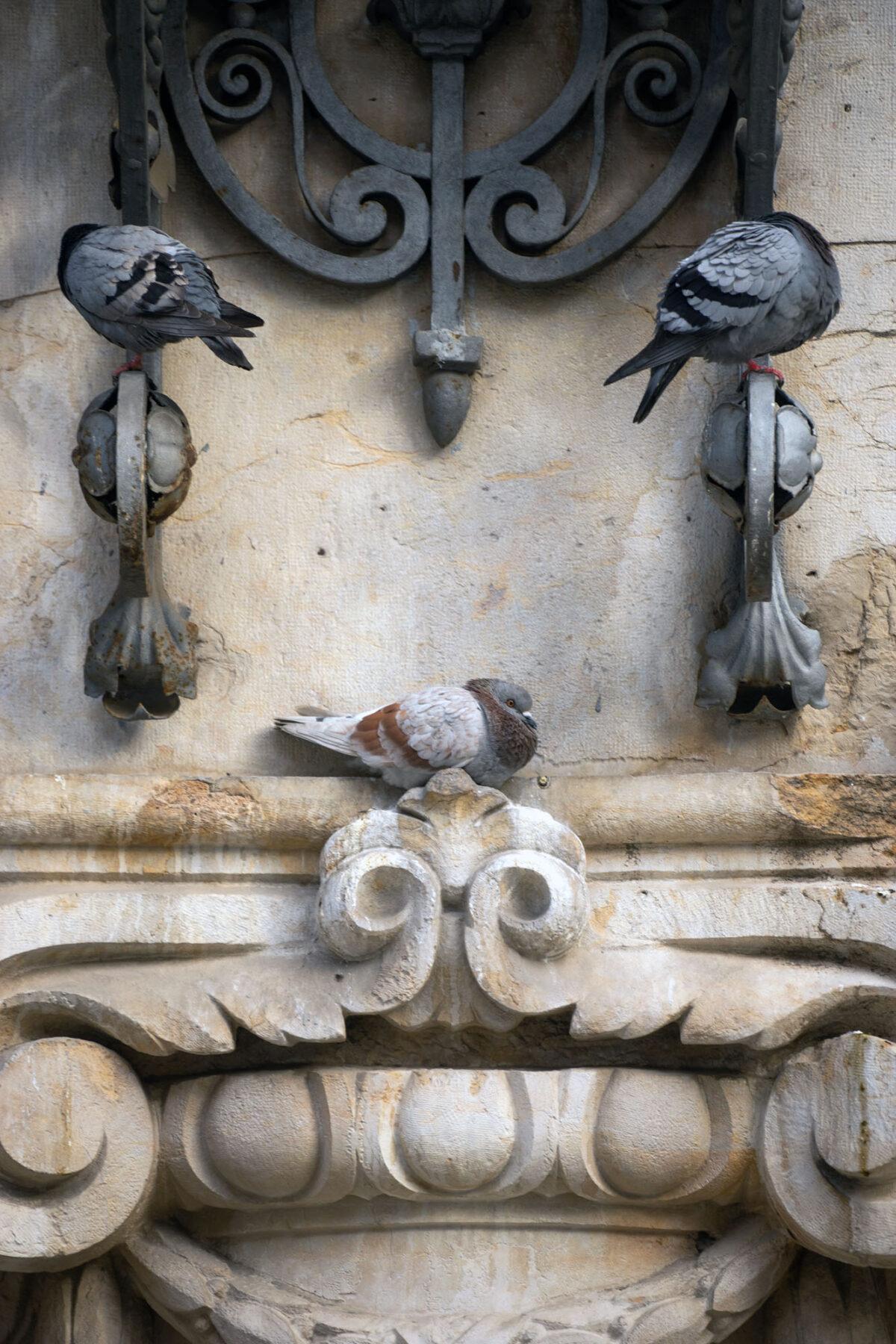 Artistic Pigeons