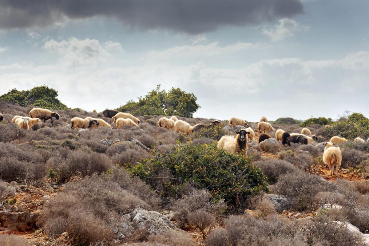 Stavros Hike Crete DSC07523 4