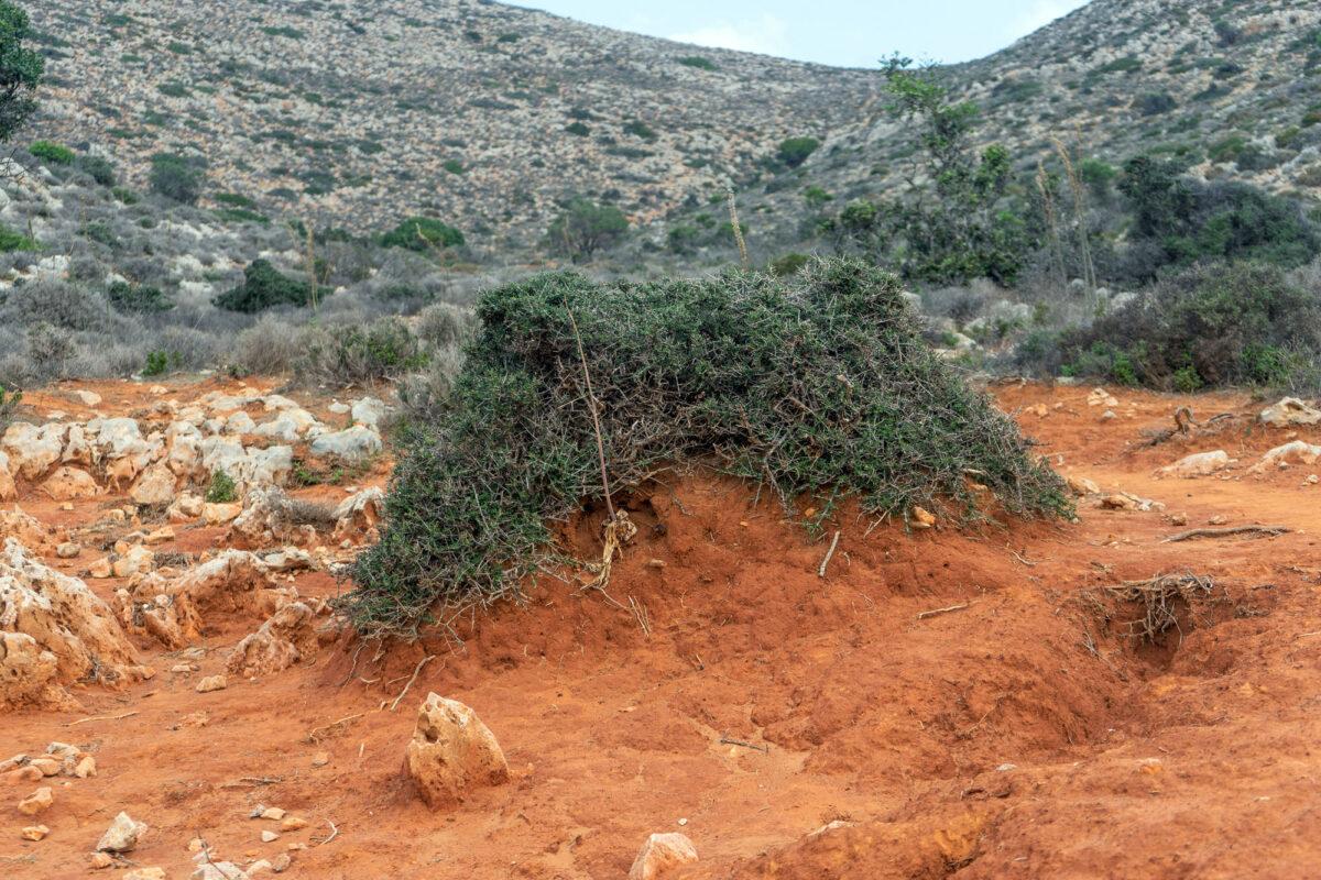 Stavros Hike Crete DSC07558 11