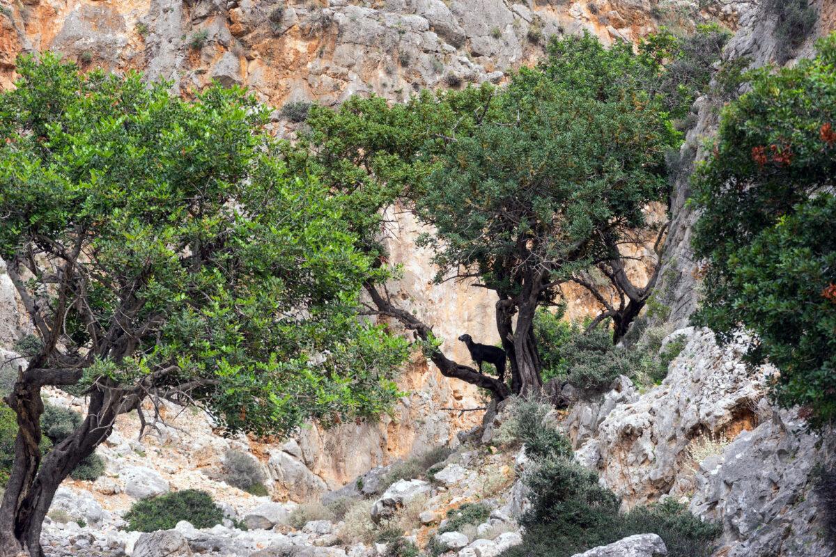 Stavros Hike Crete DSC07596 22