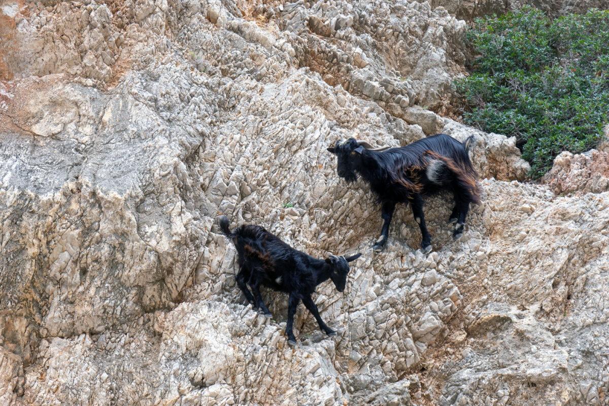 Stavros Hike Crete DSC07609 25