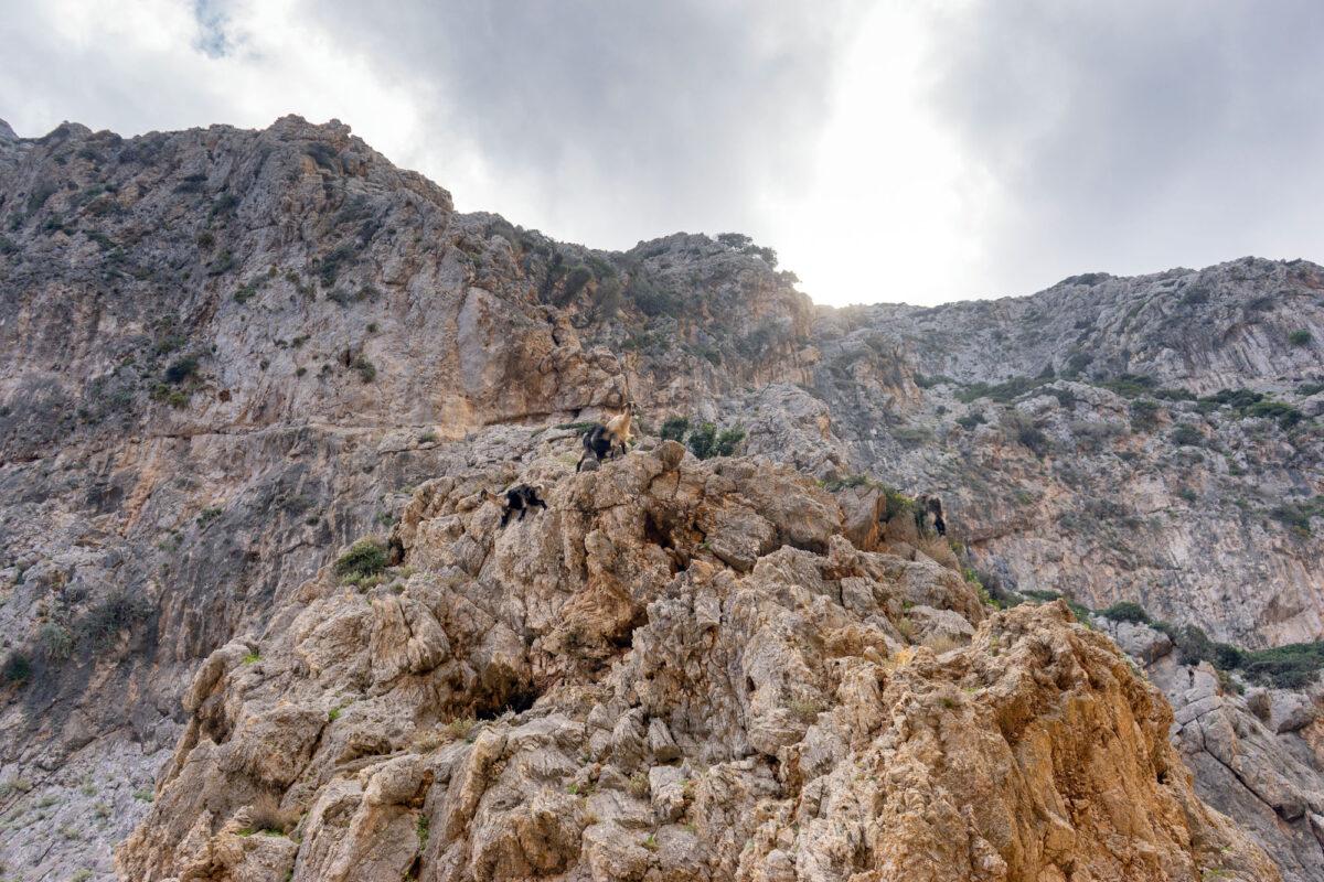 Stavros Hike Crete DSC07614 27